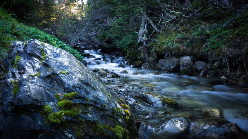 Little stream into the forest. Water effect with long exposure royalty free stock photos