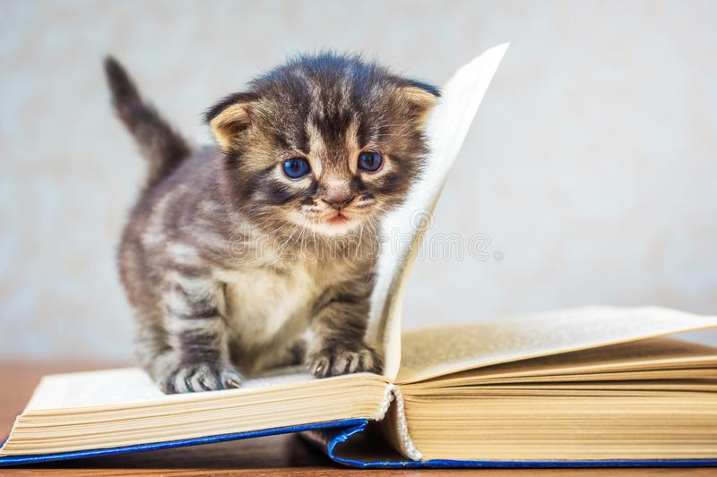 Little striped cute kitten sits on book. Kitten with blue eyes. royalty free stock photos