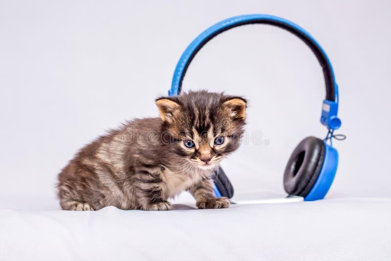 A little striped kitten near the headphones. Advertising and sal. E of headphones stock photos