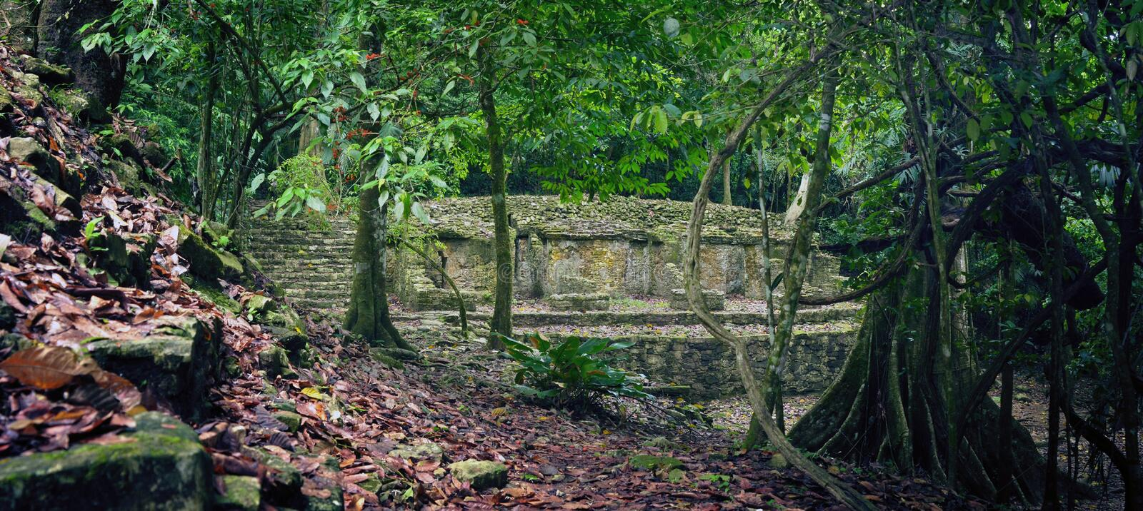 Little study of archaeological structures in the jungle in the a stock photos