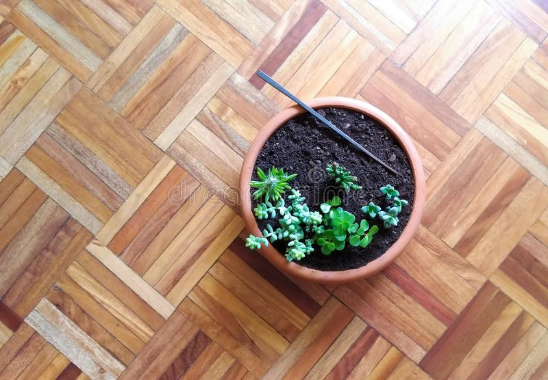 Little succulents florest. Flat image, round vase with little succulents in wooden floor as background stock images