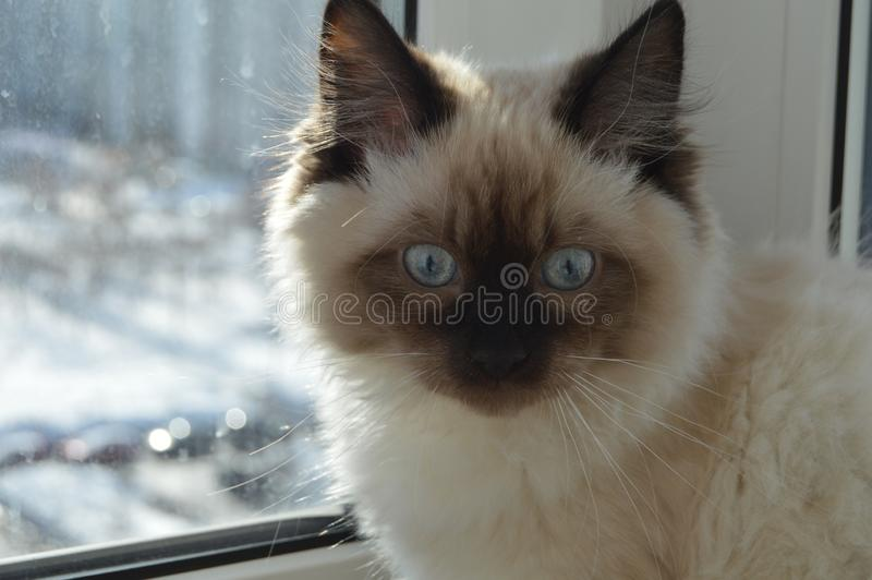 Little surprised cat sitting on the window. Little surprised cat sitting window royalty free stock photos