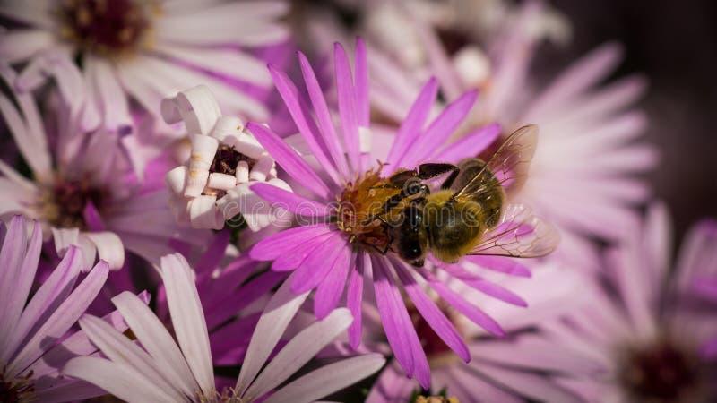 A little sweet bee in my garden stock photo