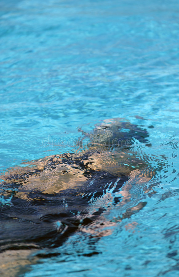Little Swimmer Under Water. Little girl swimming under water after flip turn at swim meet royalty free stock photo