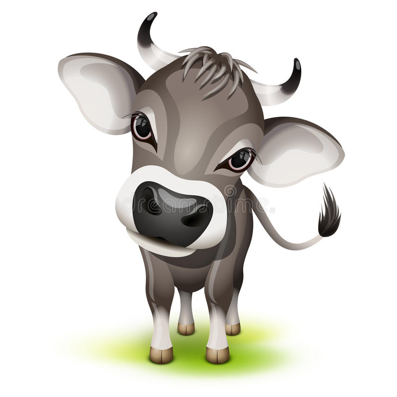 Little Swiss Cow Royalty Free Stock Photos