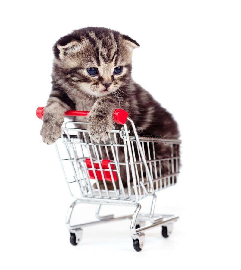 Little tabby kitten in shopping cart isolated. Little kitten sitting in shopping cart isolated on white stock images