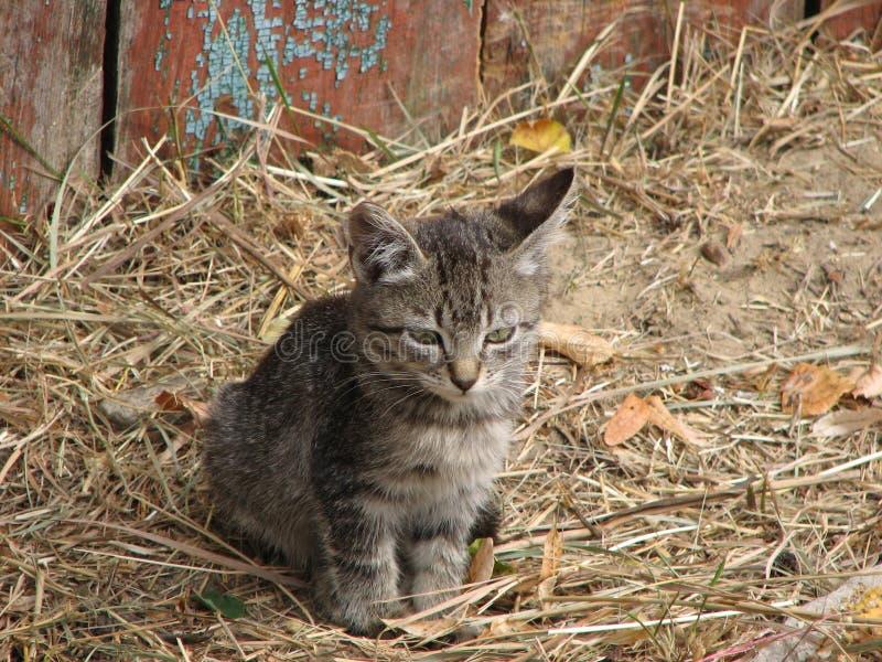 Little tiger kitten stock photo