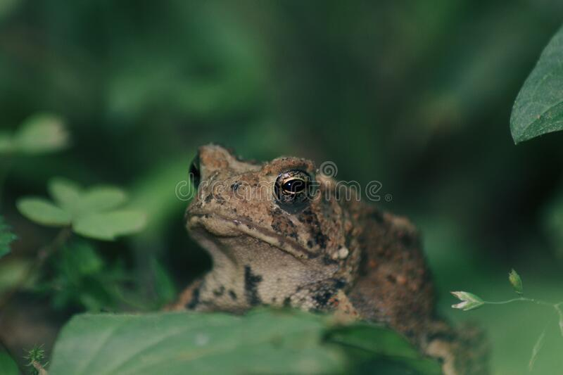 A little toad royalty free stock photo