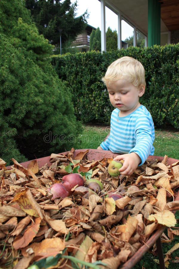 Little Toddler By The Barrow Fall Season Royalty Free Stock Images