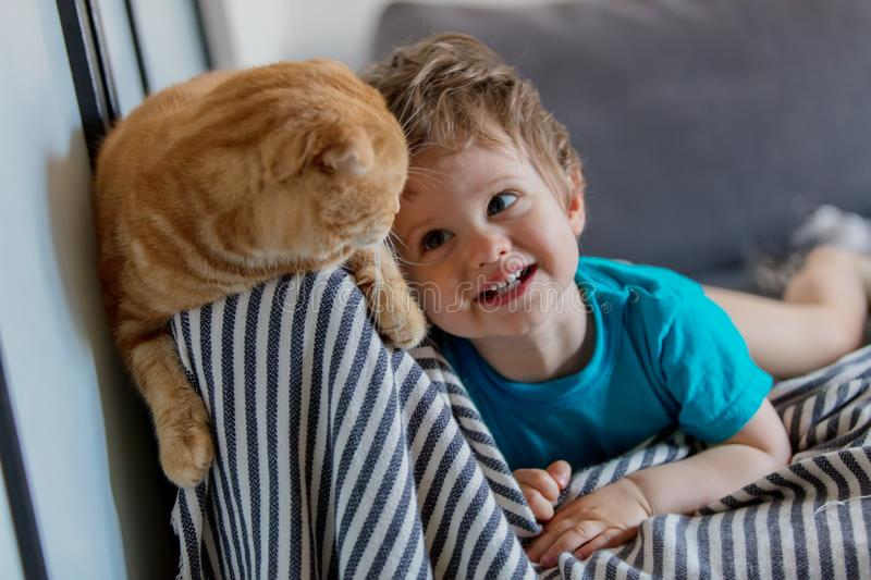 Little toddler boy play with a Scottish fold cat. In home royalty free stock photo