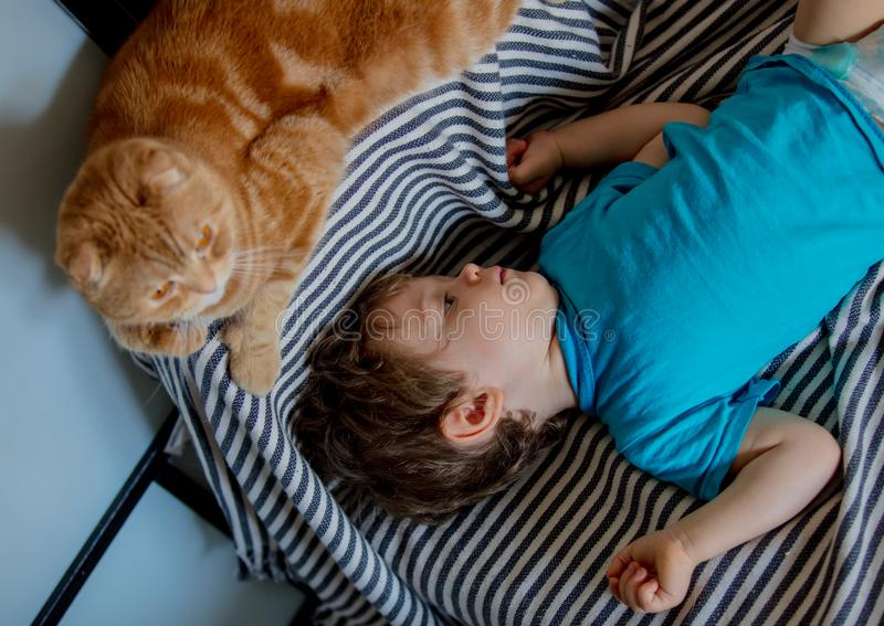 Little toddler boy play with a Scottish fold cat. In home stock images