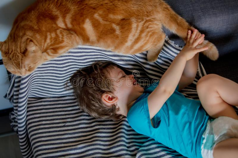 Little toddler boy play with a Scottish fold cat. In home royalty free stock images