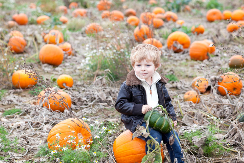 Little toddler boy on pumpkin field. Happy little toddler boy on pumpkin field on cold autumn day royalty free stock images
