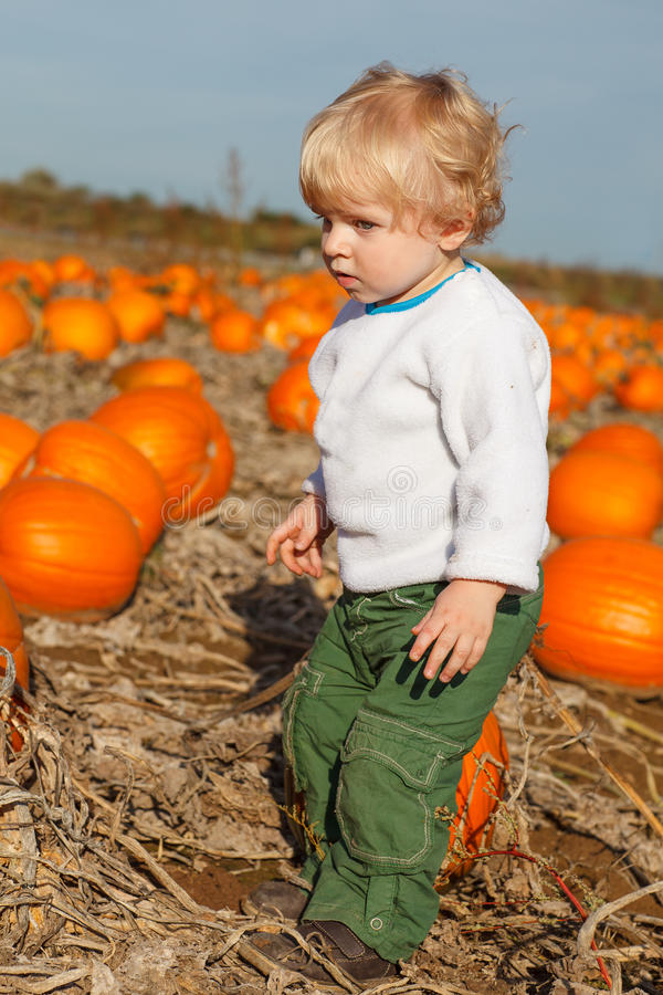 Little toddler boy on pumpkin patch field stock photo