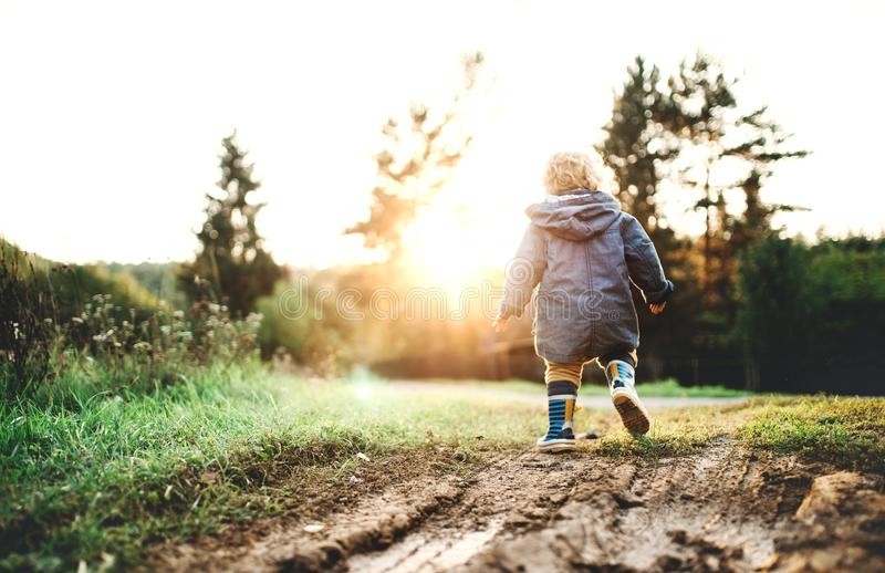 A little toddler boy walking outdoors in nature at sunset. Rear view. Copy space royalty free stock photo