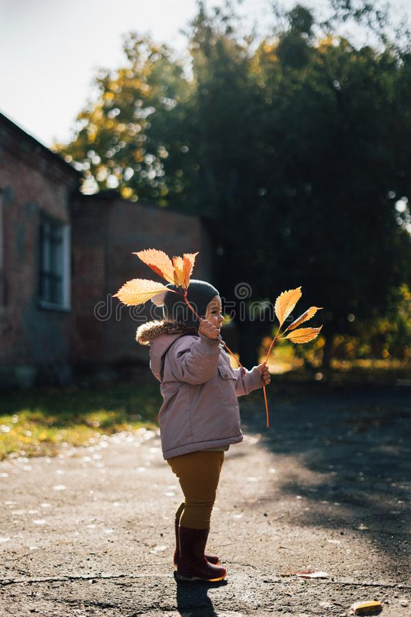 Little toddler girl in autumn park with yellow leaves royalty free stock images