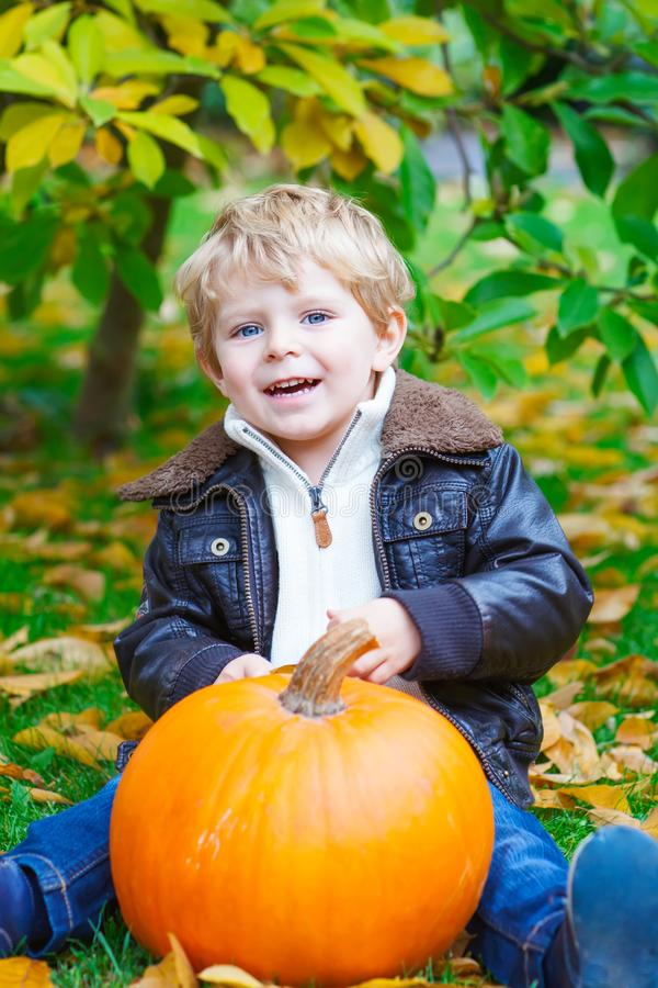 Little toddler kid boy with big orange pumpkin in autumn garden. cute child in fashion clothes having fun with huge stock images