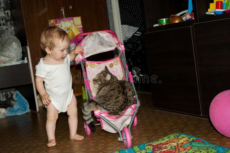 The little toddler rolls his big cat in a small baby toy stroller. Daughter-mother game. The child plays an adult role royalty free stock photography