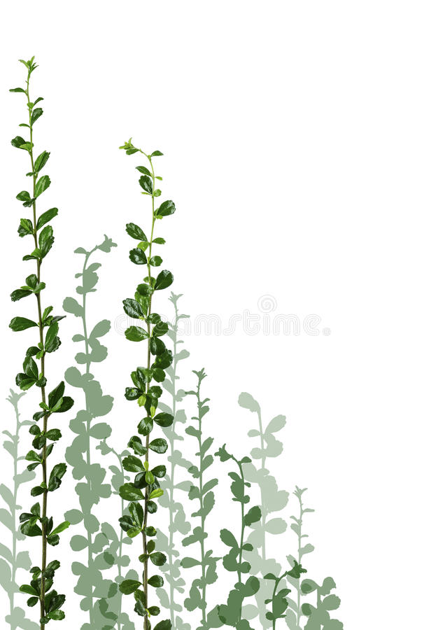 Download Little tree & creeper stock illustration. Image of nature - 42183259