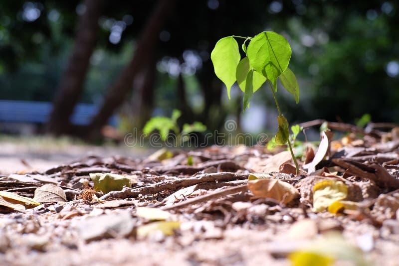 Little tree royalty free stock photos