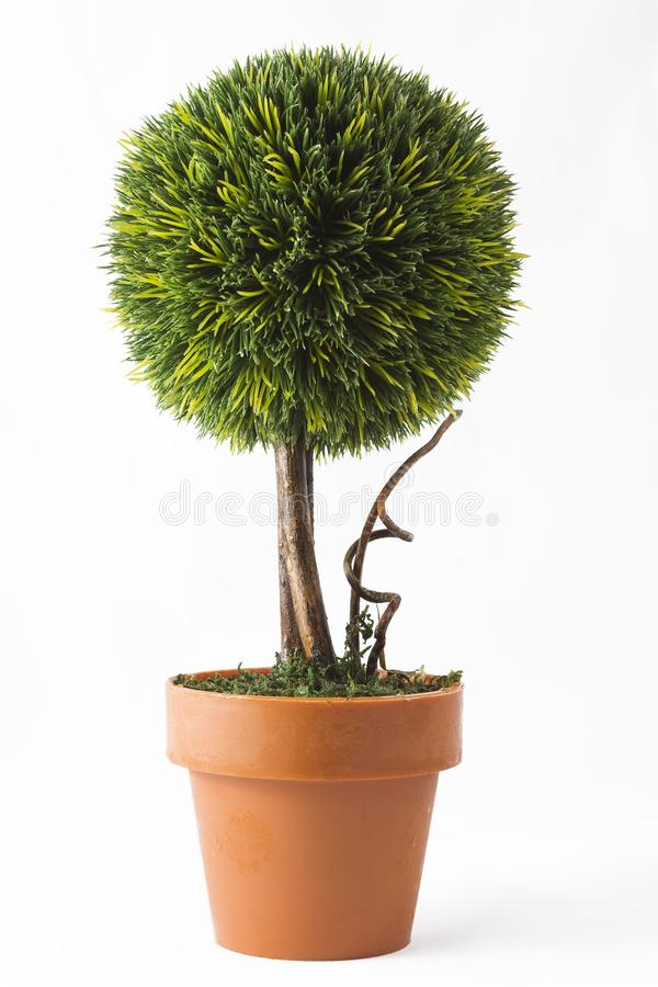 Little tree in a pot stock images