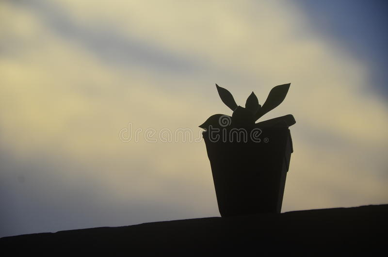 A little tree in shadow royalty free stock image