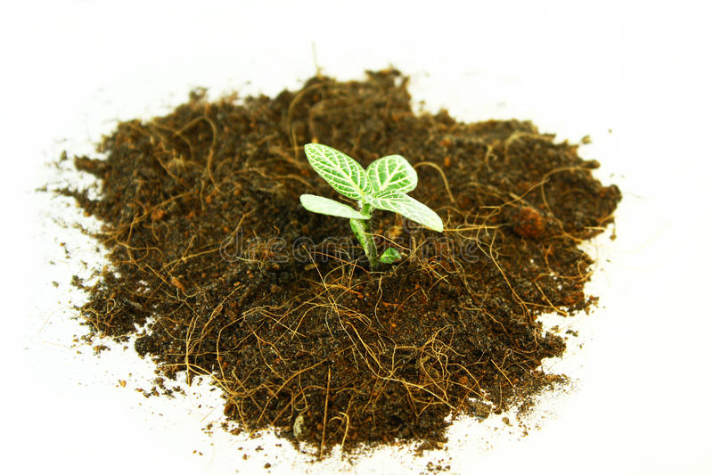 A Little Tree In Soil Royalty Free Stock Photography