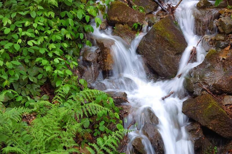little vattenfall fotografering för bildbyråer