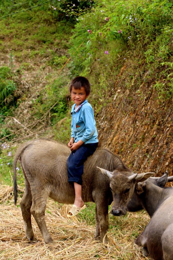 Little Vietnamese boy sitting on water buffalo royalty free stock images