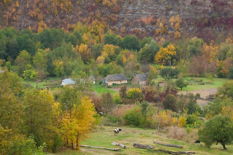 Little village in a deep valley in Vinnytsia region, Ukraine, surrounded by hills covered with green and yellow trees. A cow and some ancient houses on a cold stock image