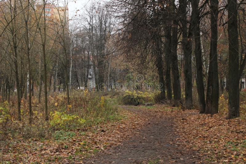 November 2018. Russia. Moscow Oblast. Korolev. Small Hospital Park. A little walk through the large city of Korolev, Moscow Oblast stock image