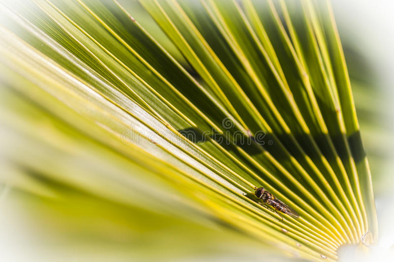 The little wasp on a palm`s leaf stock photo