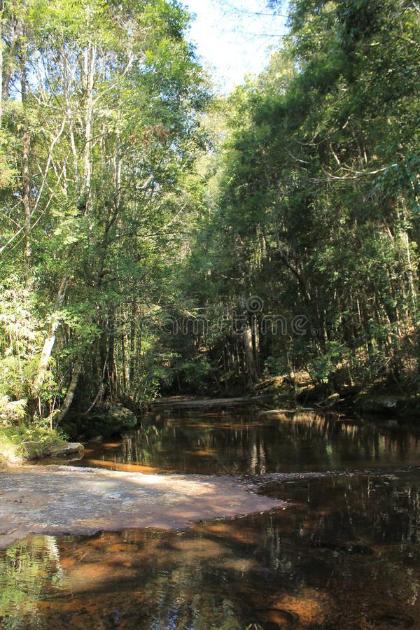 Little water in forest royalty free stock photography