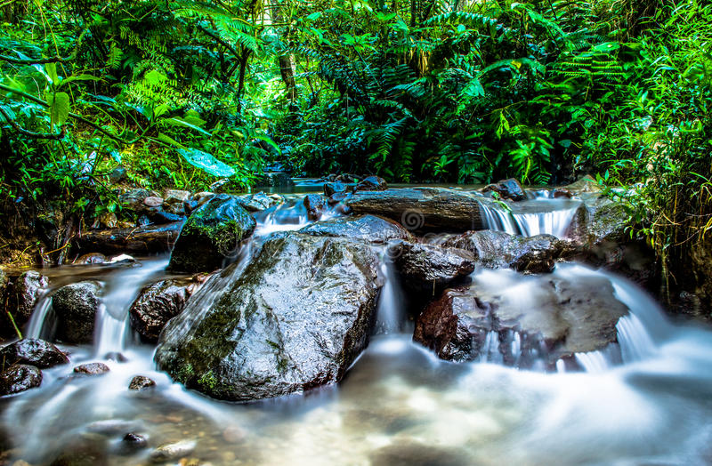 Little Waterfall in the Forest royalty free stock photography