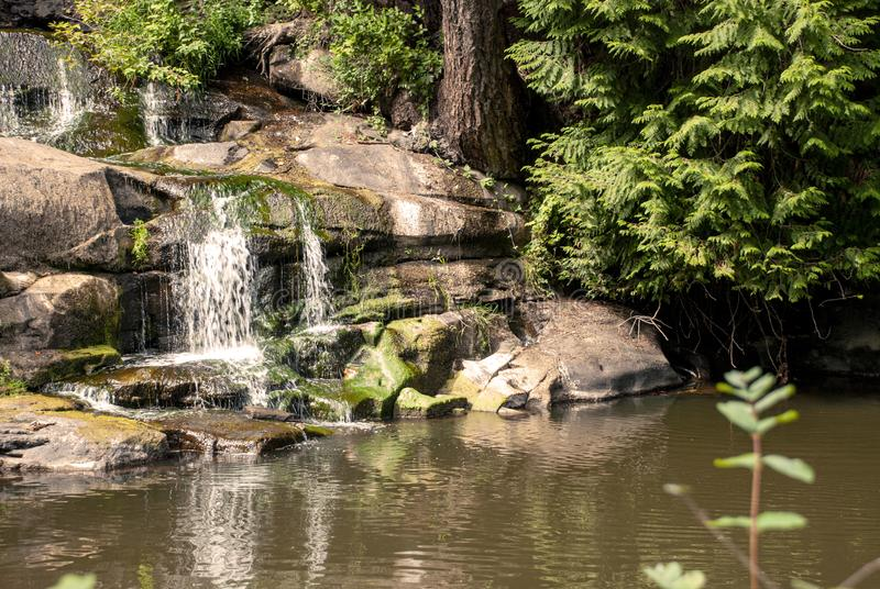 Little waterfall Victoria BC royalty free stock image
