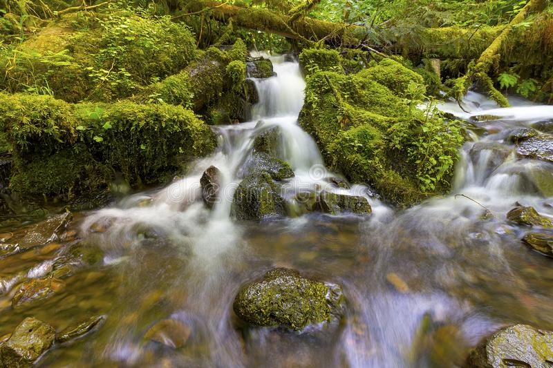 Little Waterfalls along Wahkeena Creek. Little waterfalls flowing over rocks and green moss along Wahkeena Creek at Columbia River Gorge in Oregon royalty free stock image