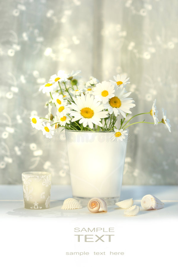 Free Little White Daisies And Seashells Royalty Free Stock Photography - 5740287