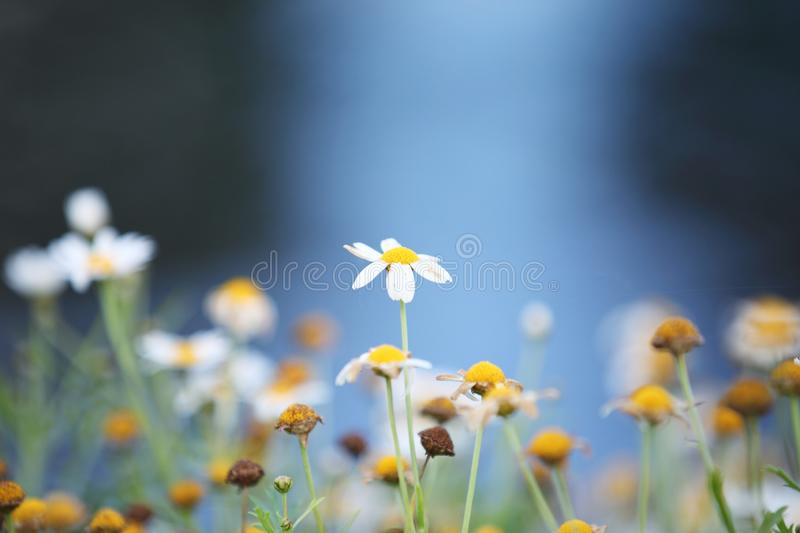 Little white flower. In close up stock image