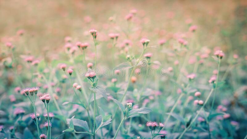 Little white flower grass flower   blooming    in nature stock photo