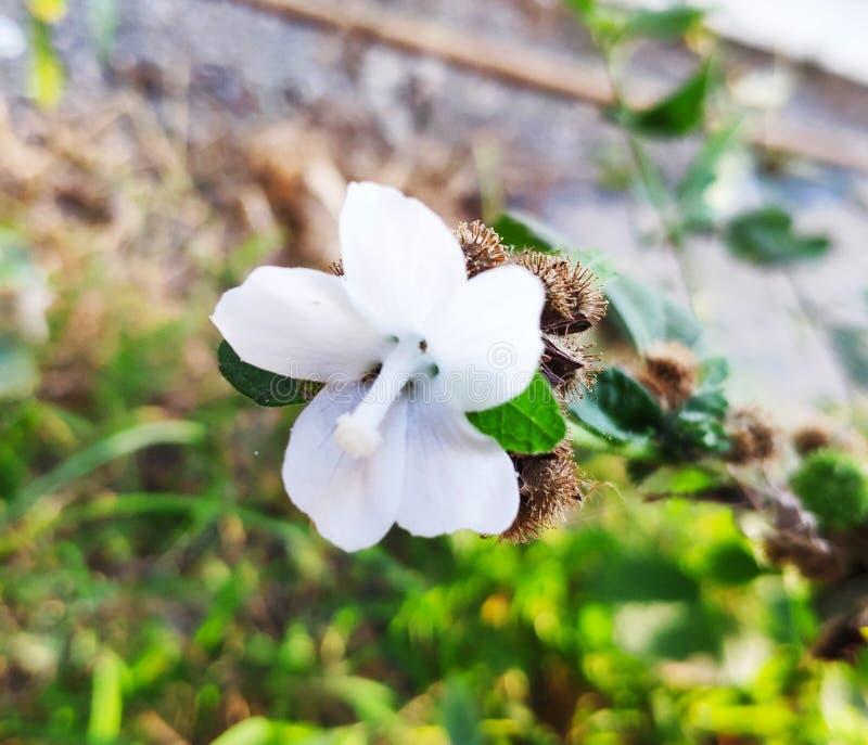 Little white flower under the sun stock images