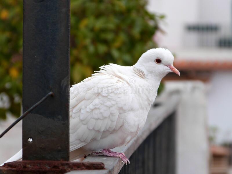 Little white guest stock photo