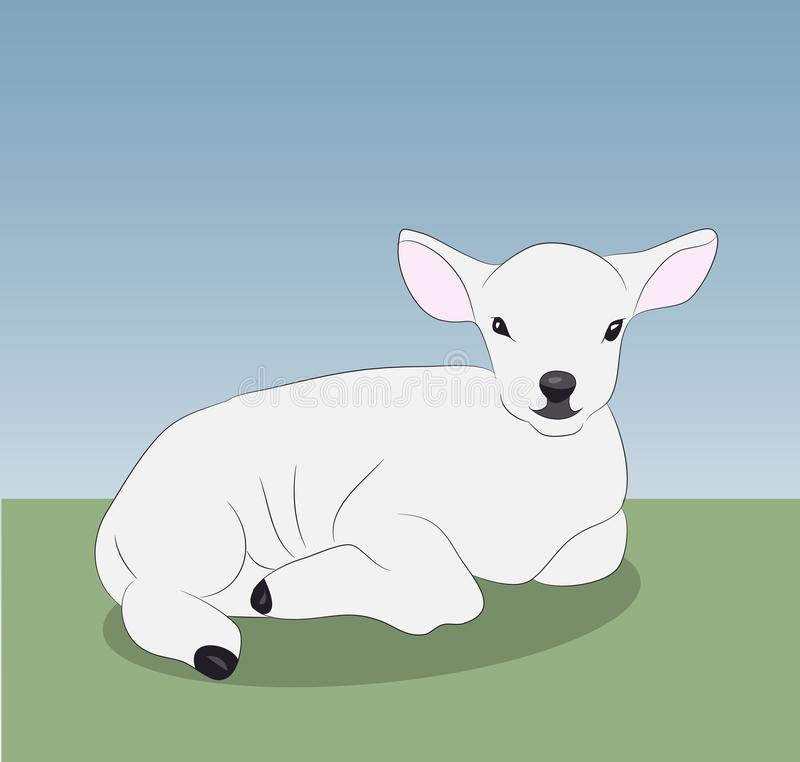 Little white lamb lying on nature stock photos