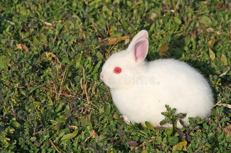 Download Little White Rabbit stock photo. Image of rabbit, fields - 4195634