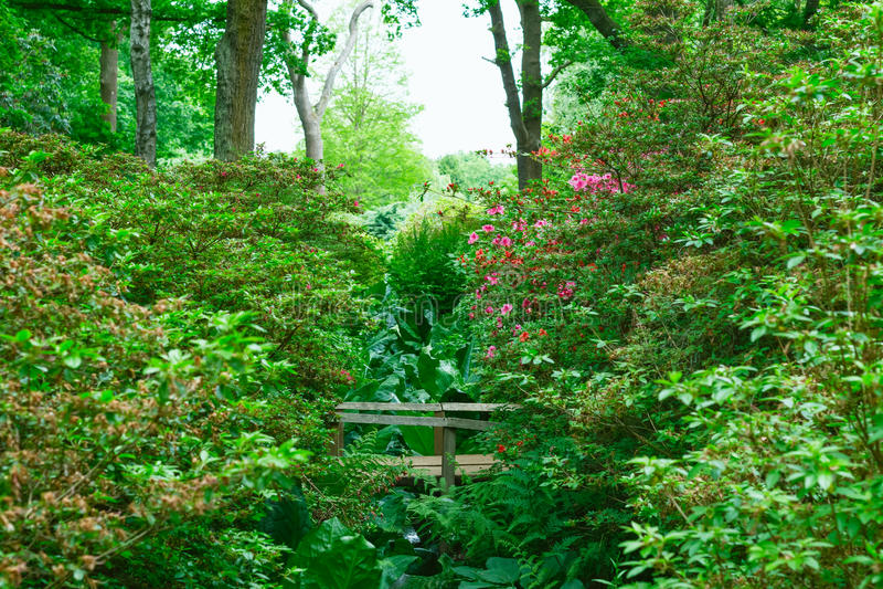 Little wooden bridge in Isabella Plantation, a woodland garden i stock photo