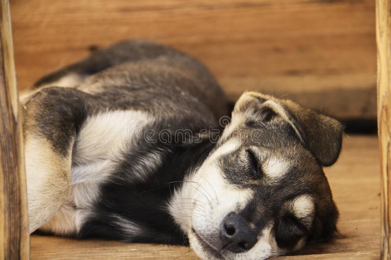 Little yard puppy dog sleeps in the booth. The concept of homeless animals. Animal protection royalty free stock photography