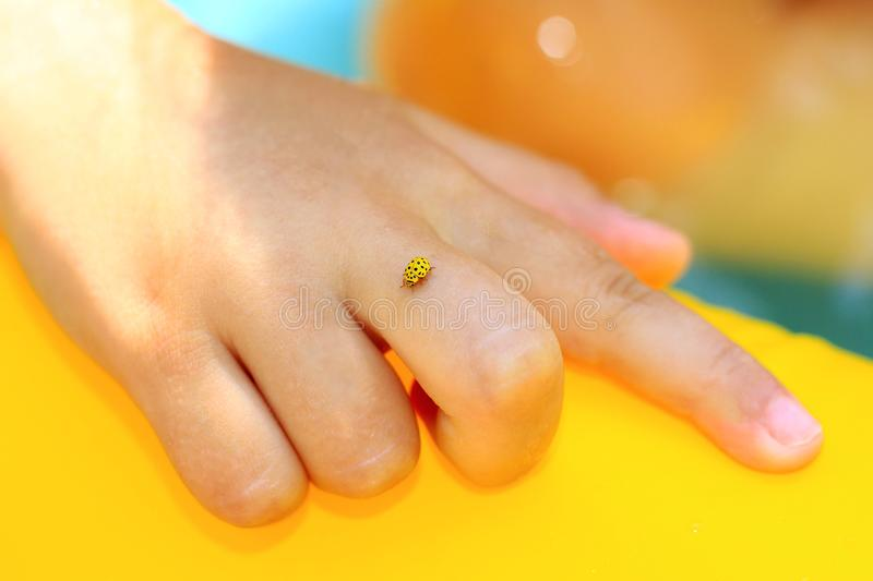 Little yellow ladybug sits on the child`s hand on a bright summer day royalty free stock image