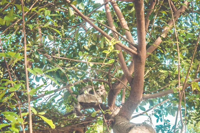 Little young cat climbing on tree looking down to the camera. Little young cat climbing on tree, scared running away from a dog royalty free stock photos