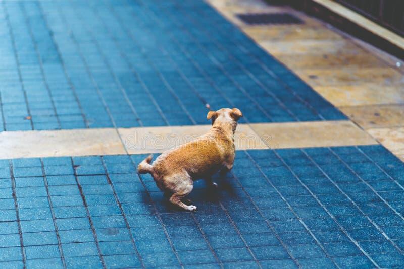 Little dog on the street stock photo