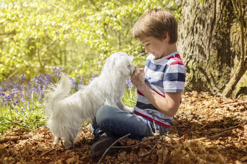 Little boy with his puppy dog in the forest. Little boy playing with his maltese puppy dog in the forest royalty free stock photo