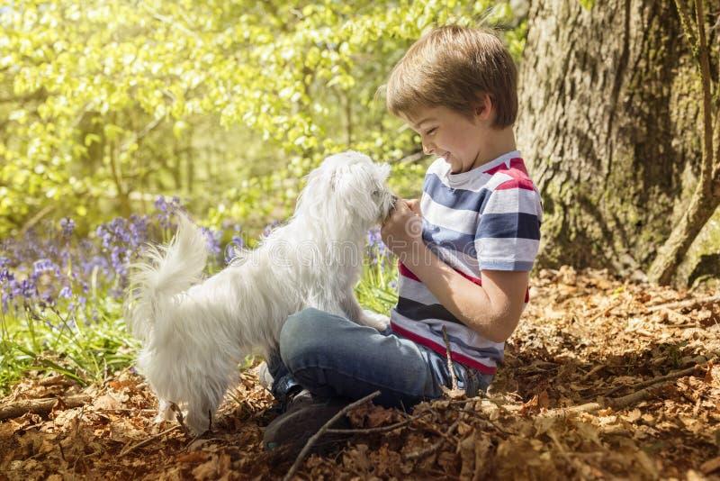Littlel pojke med hans valphund i skogen royaltyfri foto